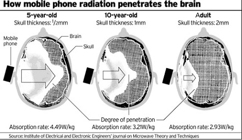 How cell phone radiation penetrates the brain