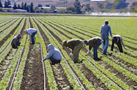 Farmworkers Another Step Toward California Overtime
