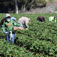 Underground Economy Keeping California's Field Enforcers Busy