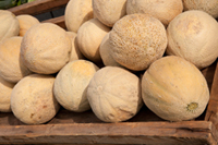 More Cantaloupe Lawsuits Filed