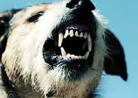 Dog Bite Lawyer Salt Lake City