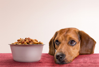 "Party Animal ""Cocolicious"" Dog Food Subject of Class Action"