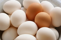 Salmonella Tainted Eggs Injure Thousands and Thousands