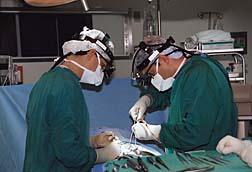 Fidelis Surgery
