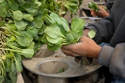 California Farmworkers Compensated for Unpaid Rest Breaks