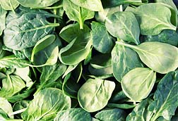 California spinach recalled to avoid food poisoning
