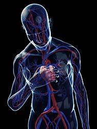 New england journal of medicine niacin study